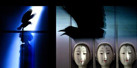 Crow-01