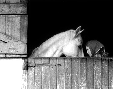 November-and-Horse.jpg