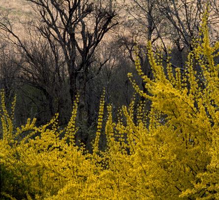Kashmir-Spring-3B.jpg